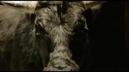 Галена 2012 - Спри ме (official Video)