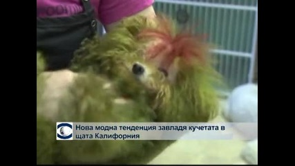 Нова модна тенденция сред кучетата в Калифорния