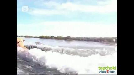 Кучета гонят акулите по крайбрежието на Австралия