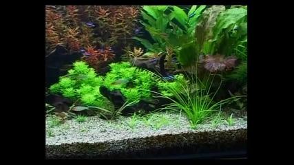 Аквариумните растения