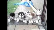 Много Сладки породисти кученца