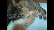 Най - Миличките Котенца На Света