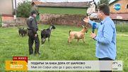 ПОДАРЪК ЗА БАБА ДОРА: Мъж иска да й дари ярета и коза