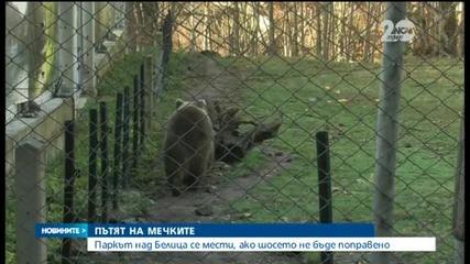 Паркът за танцуващите мечки в Белица пред закриване заради лош път