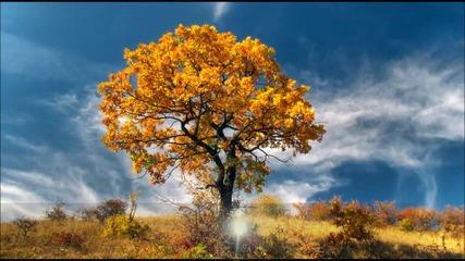 Пожелавам ти светъл и уютен за теб да е светът - стих, пожелание