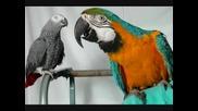 [превод] Lefteris Pantazis - Tope, tope o papagalos