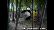 Луда Панда