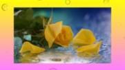 На жълтата роза! ... ...