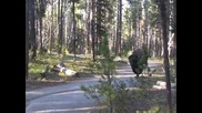 Среща с бизон в гората Смях