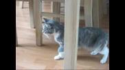 ...пияна котка.. [смях}.