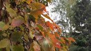 Прекрасният Октомври - стих, пожелание