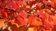 Франк Синатра - Есенни листа 2017 Prevod