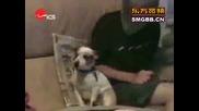 Компилация смешни кучета!!!