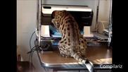 Компилация котки срещу принтери