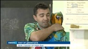 Урок с папагал от рядък вид