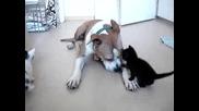 Куче и малки котенца