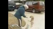 Най - Невероятното Куче