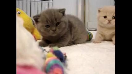 Пухкави сладки котенца