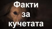 Петнайсет любопитни факта за кучетата