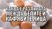 Каква е разликата между белите и кафявите яйца?