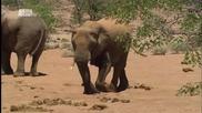 Планетата на мутантите Намибия 2014m