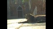 Как котки спасяват красивия град във водата