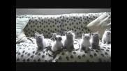 Най - смешните котета