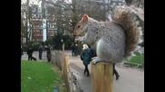 Много сладка и безстрашна катеричка седи в парка пред Бъкингамският Дворец