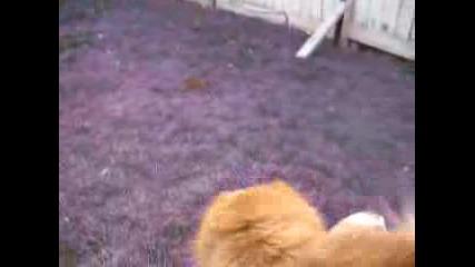 Кучешка Игра