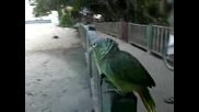 Супер луд папагал
