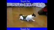 Коте и скоч-смях