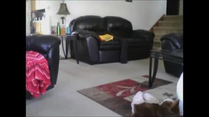 Какво прави котка, останала сама вкъщи