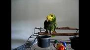 Говорещ папагал плаче като бебе - смях