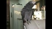 Joseph в дует с папагала си - Beatbox