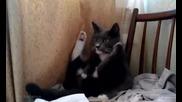 Много смях...тази котка е гледала много Тв след полунощ