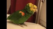 Оскар, Пеещият Папагал