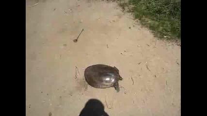 Супер бърза костенурка