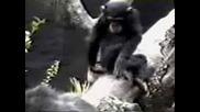 Маймуна Пада Заради самата Себе си !!