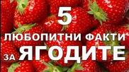 5 любопитни факти за ягодите