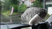 Коте срещу чистачка