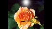 Gheorghe Zamfir - The Last Rose Of Summer