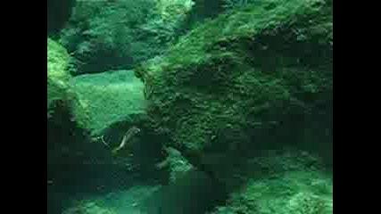 Подводно Клипче От Черно Море