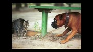 Вечно воюващите! Котки и кучета...