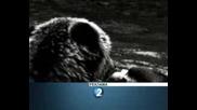 D2 - Bear