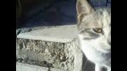 Луди Котки - 2 Част