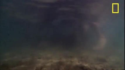 Каменна Риба [най отвратителната риба-хищник]