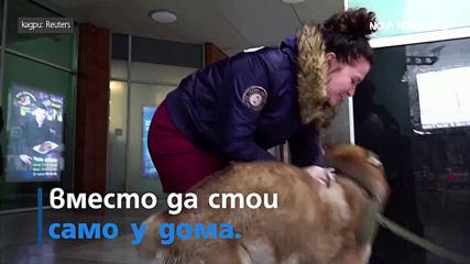 Хъски – в очакване на стопанина си и семейство в Русия тества експериментален дом