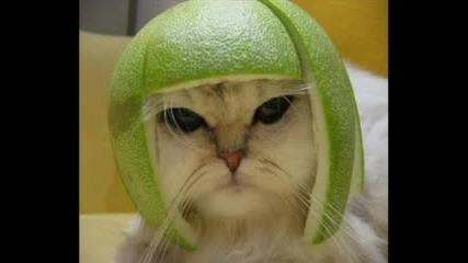CooL Cat !!!