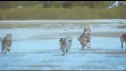 Loreena Mckennitt - Танцът на вълците