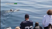 Майка делфин не може да се раздели с мъртвата си рожба в продължение на дни.